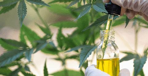 cbd oil legal in delaware