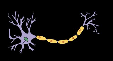 Schema neurone